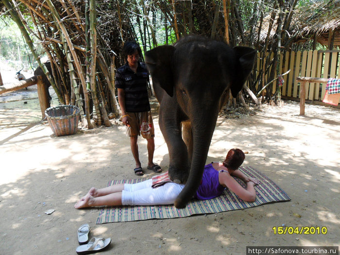 Слон делает мне массаж