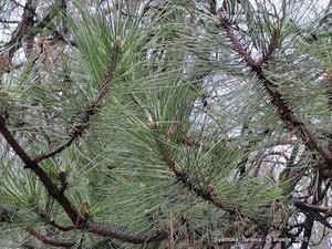 В сквере «30-летия ВЛКСМ» весьма уютно, много зелени, растет крымская сосна.