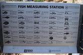 Рыбы, которые можно поймать в море