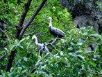 иногда попадались различные виды птиц, но сфотографировать их не получилось, они были не близко к нашей лодки