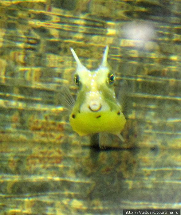 Вот оно! Boxfish!