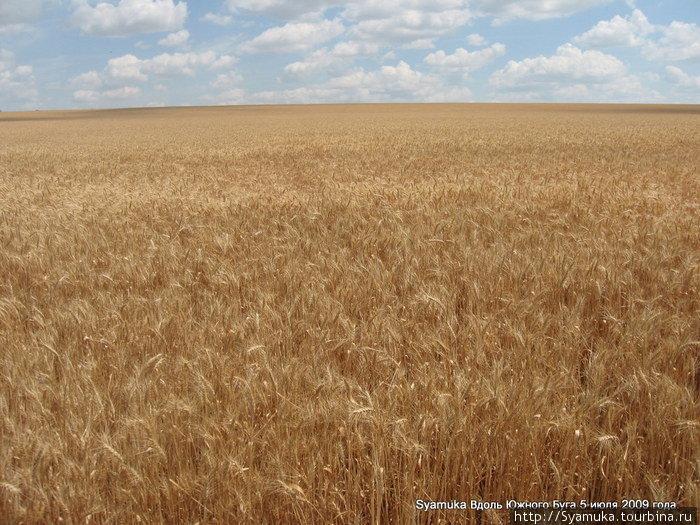Неоглядная ширь! Неповторимый аромат сухостоя смешивается с ароматом зрелой пшеницы...