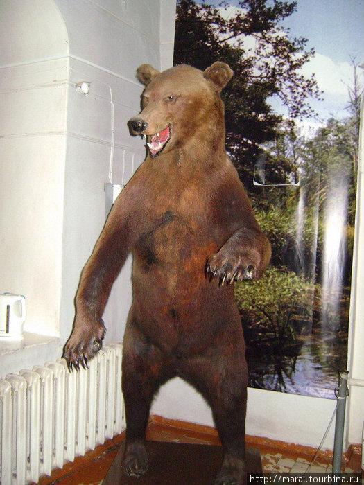 Было такое ощущение, что сейчас поднявшийся в полный рост медведь с рёвом ринется на меня, а Ярослава Мудрого с секирой как назло не было рядом