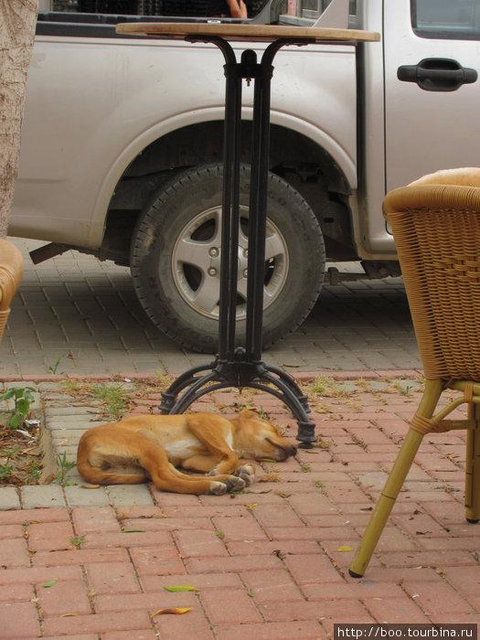 как хорошо быть щенком и валяться на тёплой плитке! :)
