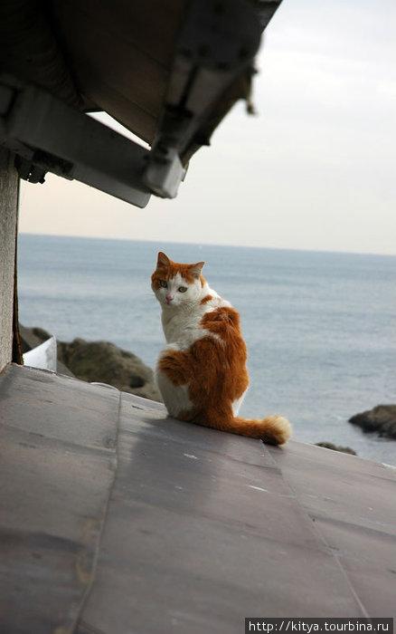 Замечательный экземпляр эносимского кота обнаружился на крыше сувенирной лавки. Любовался на море.