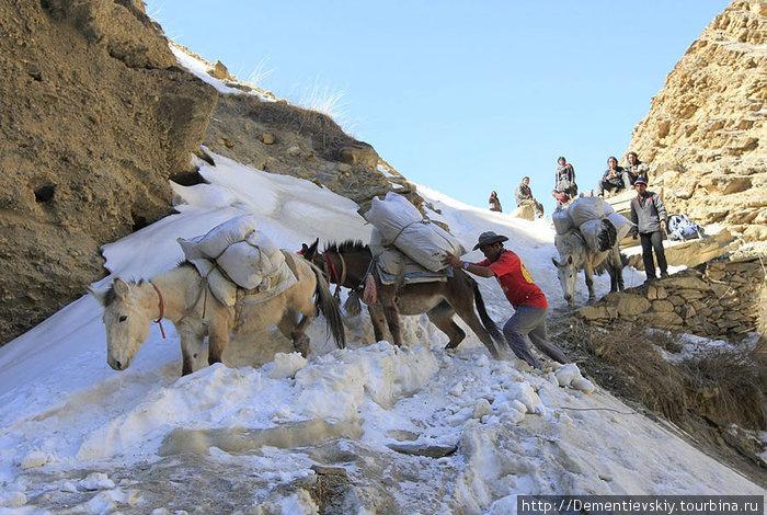 Сначала наш гид с ослик-мэном ледорубом и ногами прорубали тропинку в снегу, а потом потихоньку пускали лошадей.