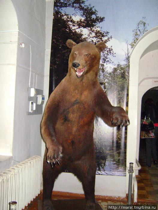 В отделе естественной истории Ярославского государственного музея-заповедника гостей встречает с распростёртыми объятиями восставший в полный рост медведь — символ Ярославля