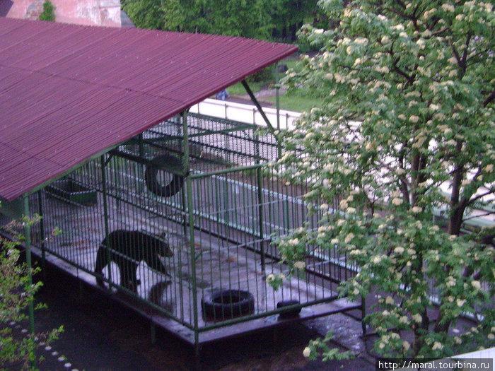 В 1990 году Машу передали в Ярославский государственный музей-заповедник.  Там у Маши появился свой дом – просторный вольер с домиком-берлогой