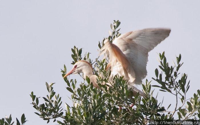 На руинах Челлы гнездится множество птиц. Гвалт стоит неимоверный.