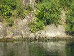 в центре фото у воды греются на солнце тюлени. сейчас наведу zoom......