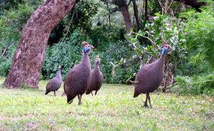эти птички гуляли радом с нами во время ланча