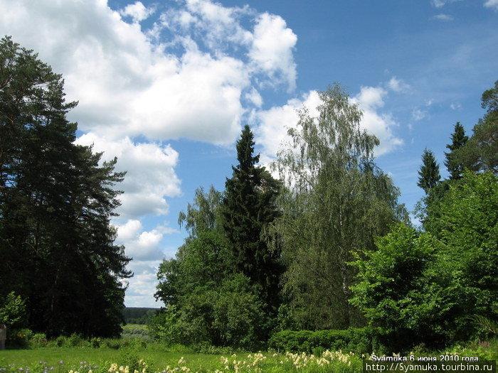 Яркая зелень верхушек деревьев  врезается в лучистую синь ясного неба. Светолюбивая сосна гордо тянется к солнцу. Тишина, море света...