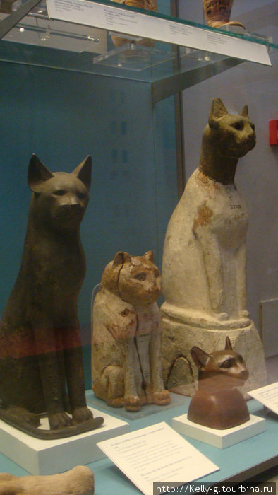 Саркофаги для кошек