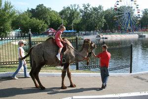 В честь праздника детей катали на конях и верблюдах.