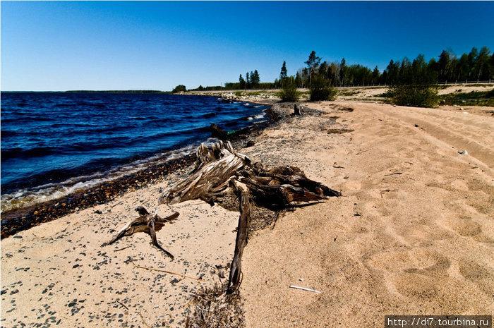 Фотографировать начали только под Медвежьегорском. Озеро Пальеозеро