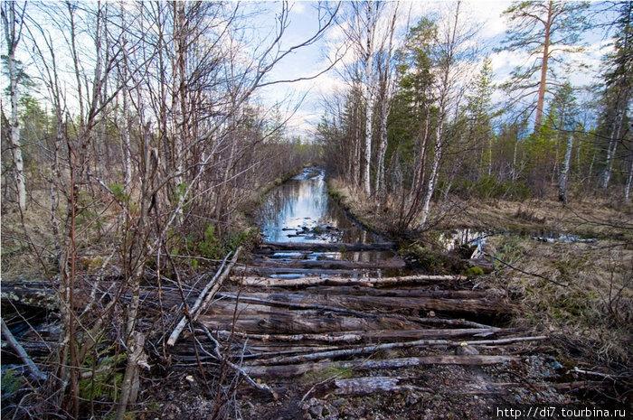 Гать через болото у озера Плотная Ламбина. Вполне даже проходимое болотце оказалось