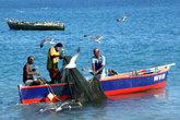 Рыбаки с сетью