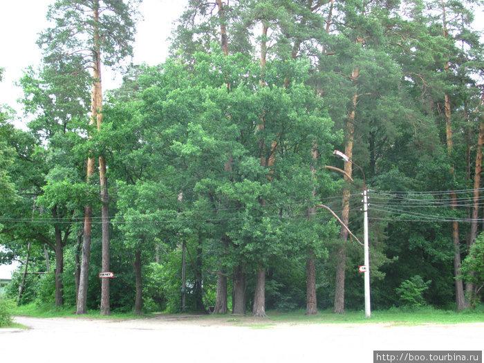 стоянка перед экскурсионным бюро. чуть дальше под деревьями есть деревянные столы для лёгкого перекуса.