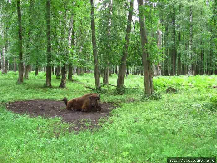 любимые места для отдыха выделяются на фоне ярко-зелёной травы