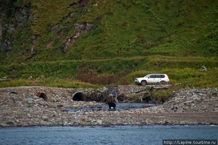 Медведь и мужики. :-)