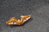 Гигантская бабочка уснула...