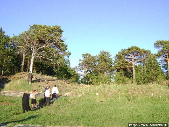 Ягринский бор — особо охраняемый на городском уровне памятник природы