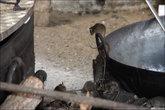 Способность крыс лазить вообще потрясает. По вертикальной гладкой металлической трубе они спокойно бегают и вверх, и вниз. У них когти или присоски на лапах?