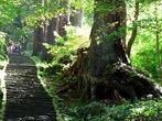 Лестница, ведущая к храму от подножия горы (мы спускаемся в обратном направлении). В ней всего более 2000 ступенек...