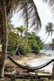 Гамак под пальмой