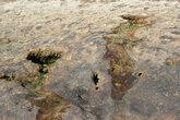 неутомимые ласки волн делают свое дело — даже самые черствые камни смягчают свой нрав бережно баюкая в выточенных водою ложбинках оставлнные про запас лужицы влаги