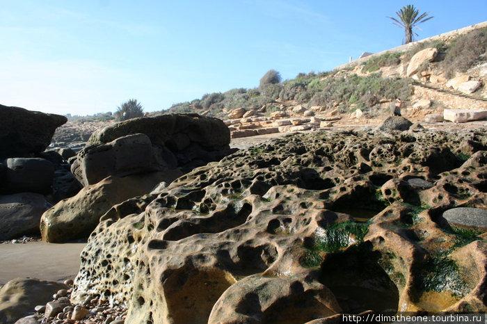 серфингистские тропы — ноздреватые стопки из песчанника перемежающеся с хаотично прикорнувшими у океана валунами и зарослями кактусов разных пород, невозмутимо произрастающих из монолита каменных глыб