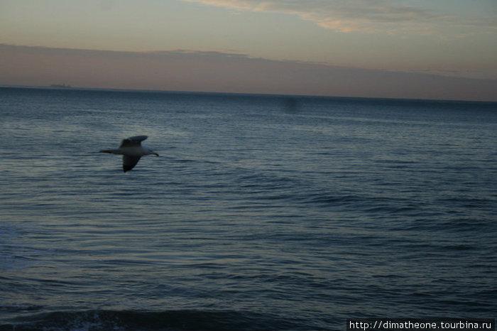 пташки в поисках завтрака реют над дремлящим океаном — до человечков ни свет ни заря пробравшися на мокрые скалы и теперь исступленно жимкающих на кнопку