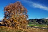 Где-то посередине между Те-Анау и Квинстауном. Начались жёлтые листья и осенние краски, которые мы и ожидали здесь увидеть...