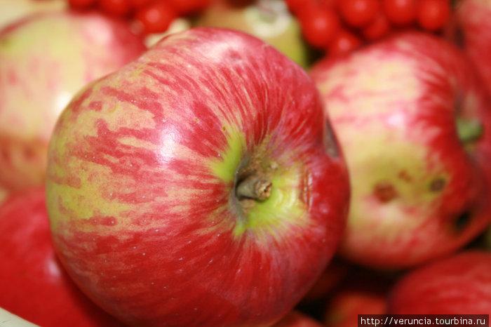 Яблок в этом году будет богатый урожай.