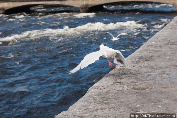 Голуэй такой, какой он есть Голуэй, Ирландия