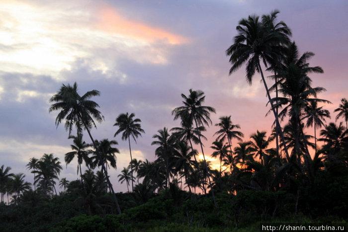 Закат и пальмы