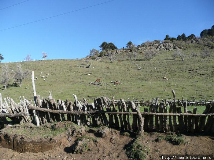 Мы переехали через Анды,живописные леса исчезли,совсем другая природа.По вершине горки проходит Аргентинская граница.