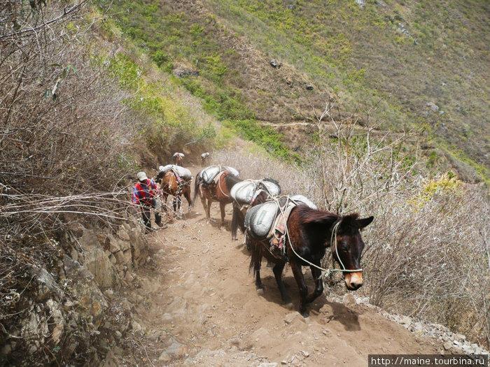 Здесь все перевозки грузов делают на мулах.