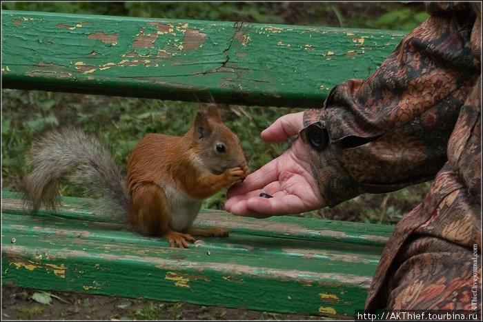 Обязательно в другой раз надо будет взять с собой нежареных семечек или орешков. Больно охотников до них там много