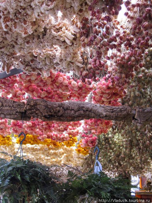 Потолок из сухоцветов