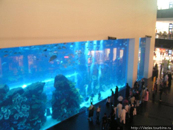 Витрина аквариума