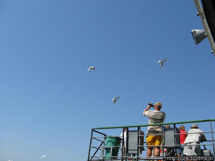 отплывая от берега над паромом начинают кружить чайки