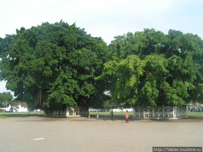 Два дерева и проход между ними