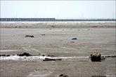 Берега озера глинисты и грязны.