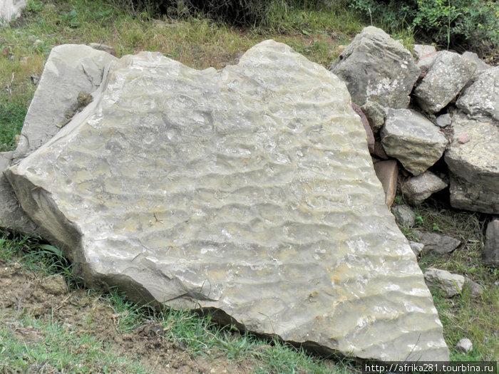 Фрагмент окаменевшего дна доисторического океана