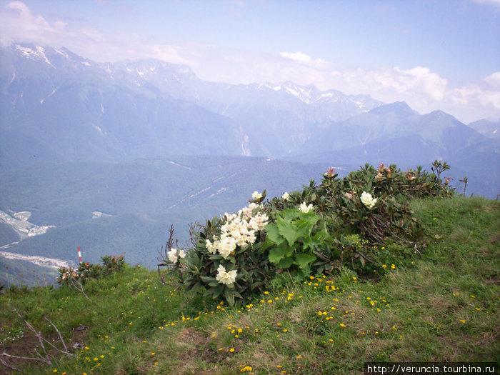 Чем выше в горы, тем красивее виды.