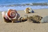 Крабик сидит на норке, в окружении узорных ракушек, любуясь видом на море