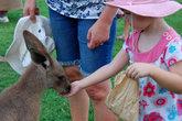 Кенгуру в зоопарке практически безопасны. Их могут кормить даже дети