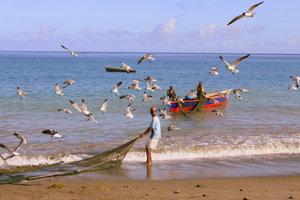 Любители свежей рыбки в море на земле и в воздухе