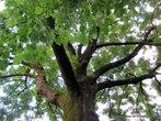 В городе сохранился живописный парк XVIII в. с высокими деревьями с густой и раскидистой кроной, с качалями — каруселями для малышей, и с лавочками для \посидеть в тени\.